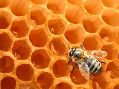 Honig: Eigenschaften und Anwendungen