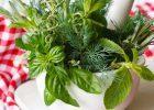 Heilpflanzen: Hexerei Wissenschaft